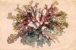 ALGUES MARINES - Flowers, Plants & Trees