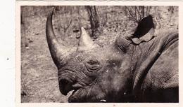 CPSM CAMEROUN Animal Sauvage Rhinocéros D' Afrique Nashorn Rinoceronte Hocopor - Rhinocéros
