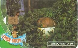 TARJETA DE RUSIA DE UNA SETA (HONGO-MUSHROOM) - Alimentation