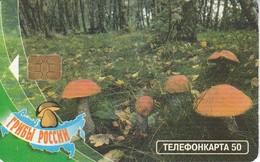 TARJETA DE RUSIA DE UNA SETA (HONGO-MUSHROOM) - Alimentazioni