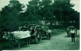 N°60434 -cpa Attelage De Boeufs Dans Le Pays Basque- - Attelages