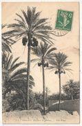 Algérie - Palmiers - Régime De Dattes - ND 3A - Algérie