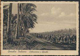 °°° 10319 - SOMALIA ITALIANA - COLTIVAZIONE A GENALE - 1937 °°° - Somalia
