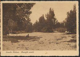 °°° 10320 - SOMALIA ITALIANA - BOSCAGLIA SOMALA - 1937 °°° - Somalia