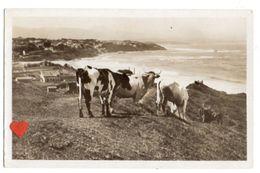 19201-LE-64-BIARRITZ-Vue Sur Les Pyrénées-------------troupeau De Vaches - Biarritz