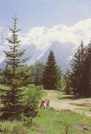 Gemmenich   H517       ( Paysage De Montagne ) - Plombières