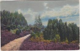 Blühende Heide - (1918) -  (Amsterdam, Holland/Nederland Naar London, England) - Andere
