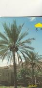 PALMIERS DATIERS - Oman