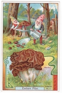 Nains Et Gyromitre (champignon) - Chromos