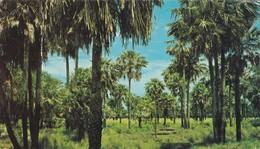 CHACO, PALMAR. EDICOLOR,MACCHI. LANDSCAPE, ARGENTINE -BLEUP - Argentinië