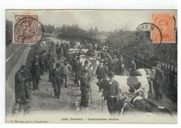 1300.Esschen - Quarantaine Stallen - Essen