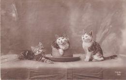 Vintage Postcard. 3 Beautiful Kittens. - Cats