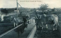 TUNISIE(SAINT JOSEPH DE THIBAR) - Tunesië