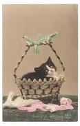 CHATS - Chaton (apeuré) Au Panier - Cats