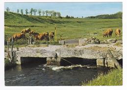 48 Grandrieu Vers Chateauneuf De Randon N°16 Pont Sur Le Grandrieu En 1987 Beau Troupeau De Vaches - Chateauneuf De Randon