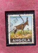 ANGOLA 1953 FAUNA ANIMALS Horto·beest. ANIMAL ANIMALE AGS. 5a USATO USED OBLITERE' - Angola