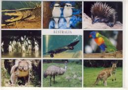 AUSTRALIAN WILDLIVE KOALA COCKATOO CROCODILE KOOKABURRA PENGUINS KANGOROOS ... NICE STAMP - Australia