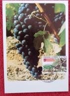 ESPAGNE Vigne Et Vin, Raisin. Carte Maximum 1er Jour 1983 - Vins & Alcools