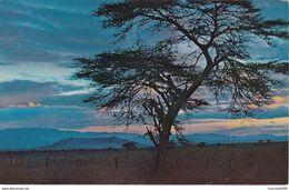 CARTOLINA - POSTCARD - KENIA - AFRICAN SUNSET - Kenia