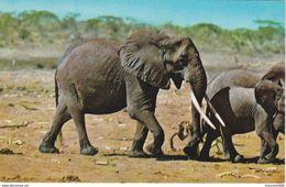 CARTOLINA - POSTCARD - KENIA - AFRICAN WILD LIFE - ELEFANTI - Kenia