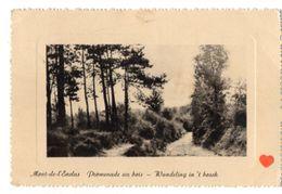 24018-LE-BELGIQUE-Mont-de-l' Enclus-Promenade Au Bois - Mont-de-l'Enclus
