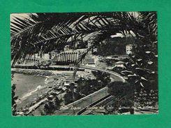 Ct1381 - Celle Ligure - Scorcio Tra Le Palme - Savona