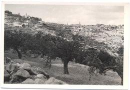 Foto Reale Di Panorama Di Città Con Ulivi In Primo Piano, In Terra Santa - Anni 60/70 - Non Identificato - Altri