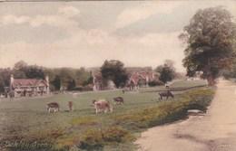 OAKLEY GREEN - Surrey