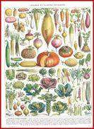 Légumes Et Plantes Potagères Illustration Adolphe Millot Recto Divers Cultures Verso Larousse 1948 - Vieux Papiers
