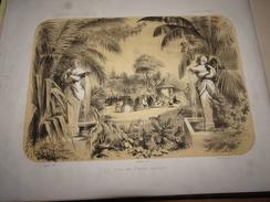 Jardin Des Plantes, Serre Des Plantes Exotiques, Estampe De 1850, Dessin Par Pauquet, Lithographié Par Bocquin - Vieux Papiers