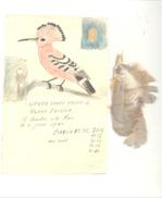 Ornithologie - Baguage D'oiseau Au Nid - HUPPE, SAINT - ANDRE 1944 - Fiche Manuscrite, Dessin, Renseignements Et Plumes - Fichas Didácticas