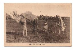 AGRICULTURE . LABOURAGE ARABE - Réf. N°6817 - - Attelages