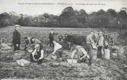 23)   AHUN  - Ecole D' Agriculture Defumade - Arrachage Des Pommes De Terre - France