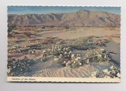 GARDENS OF THE DESERT - Phoenix - Arizona - USA - Phoenix
