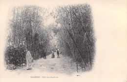 Afrique Algérie ( Scènes & Types) Allées De Bambous (Cpa  DOS SIMPLE )*PRIX FIXE - Scènes & Types