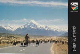Big Postcard Of A Sheep Mustering,New Zealand.,Size=180mmx120mm.APROX,L42. - New Zealand