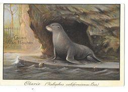 OTARIE - Publicité Pour CACAO VAN HOUTEN - Carte Chromo Lithographiée - Fiche Didactique Au Verso - Tierwelt & Fauna