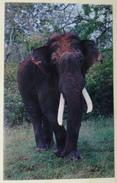Indian Elephant At ZOO. Mysore. 0346 - Elephants