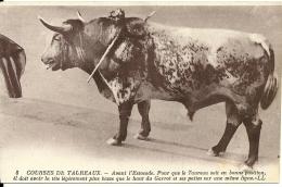 Corrida Course De Taureaux - Corrida