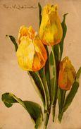 C. KLEIN - CATHARINA KLEIN - FIORI - FLOWERS - BLUMEN - FLEURS - TULIPANI - N 218 - Klein, Catharina