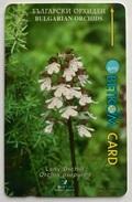 Bulgarian Orchids - Bulgaria