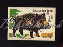 56-155 CZECHOSLOVAKIA 1961 Live Beauty Of The Czechoslovak Socialist Republic - Wild Boar Sus Scrofa Wild Pig - Boites D'allumettes - Etiquettes