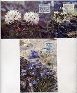 GREENLAND 1990 Flowers II On Three Maximum Cards.  Michel 205-07 - Maximum Cards