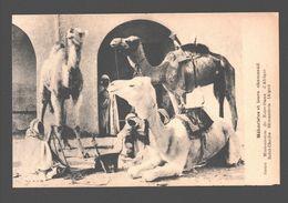 Méharistes Et Leurs Chameaux - Ed Soeurs Missionnaires à Birmandreis (Alger) - Algérie