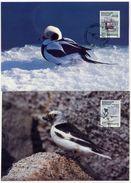 GREENLAND 1989 Birds III.on Maximum Cards.  Michel 191-94 - Maximum Cards
