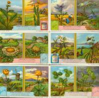 LIEBIG : S_1216 : Plantes Sensitives (les) - Zonder Classificatie