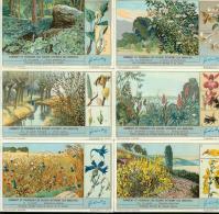LIEBIG : S_1290 - 'Comment Et Pourquoi Les Fleurs - Unclassified