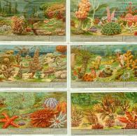 LIEBIG : S_1345 : 'Paysages Sous-marins - Jeux De Société