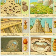 LIEBIG : S_1364 : 'Termites (les) - Jeux De Société