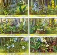LIEBIG : S_1568 : 'Fleurs Des Bois - Group Games, Parlour Games